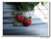 大湖採草莓200701:100_5581.jpg