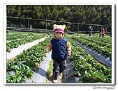 大湖採草莓200701:100_5586.jpg