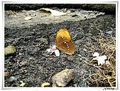 自然生態攝影(20110714Updated):IMG_2372.JPG