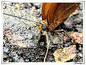 自然生態攝影(20110714Updated):IMG_2377.JPG