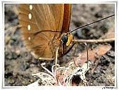 自然生態攝影(20110714Updated):IMG_2386.JPG