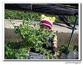 大湖採草莓200701:100_5596.jpg