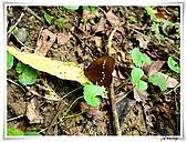 自然生態攝影(20110714Updated):IMG_2507.JPG
