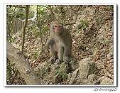 高雄壽山動物園200204:04140007.jpg