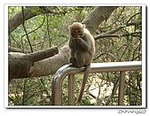高雄壽山動物園200204:04140008.jpg