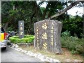 金蛇年初一復興三路賞櫻:P1000747.JPG
