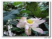 羅東林業園區:IMGP0093.JPG