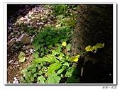 20100313淡水天元宮陽明山:IMGP0673_nEO_IMG.jpg