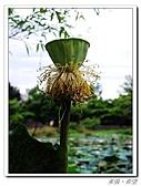 羅東林業園區:IMGP0095.JPG