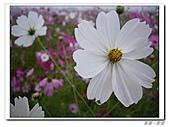 20101105-06台中pentax:IMGP0459.JPG