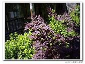20100531~0602宜蘭太平山:IMGP0253.jpg