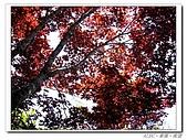 20100531~0602宜蘭太平山:IMGP0256.jpg