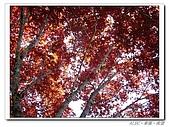 20100531~0602宜蘭太平山:IMGP0257.jpg