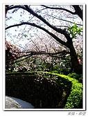 20100313淡水天元宮陽明山:IMGP0683_nEO_IMG.jpg