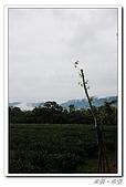 20100427苗栗三義:IMG_0433.jpg