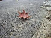 20090803秘境之南後慈湖:槭