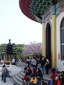 20100313淡水天元宮陽明山:IMGP0677.JPG