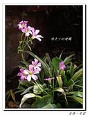 20110403漫步台北城:IMGP0491.JPG