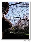 20100313淡水天元宮陽明山:IMGP0685_nEO_IMG.jpg