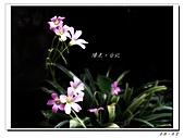 20110403漫步台北城:IMGP0492.JPG
