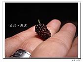 20110403漫步台北城:IMGP0476.JPG