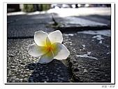 20100821遺落在街頭:IMGP0614.JPG