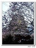 20100313淡水天元宮陽明山:IMGP0665_nEO_IMG.jpg