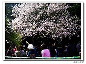 20100313淡水天元宮陽明山:IMGP0666_nEO_IMG.jpg
