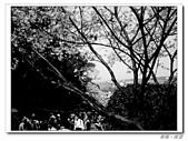 20100313淡水天元宮陽明山:IMGP0679_nEO_IMG.jpg