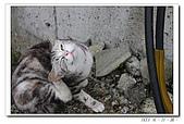 20100517侯硐:11大頭貼.jpg