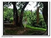 20091010北藝大飄流木:IMGP3380.jpg