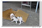20100517侯硐:18大頭貼.jpg