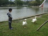 大白鵝:DSC09770.JPG