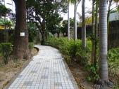 榮富公園~山櫻:榮富公園4-20150210.JPG