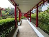 榮富公園~山櫻:榮富公園11-20150210.JPG
