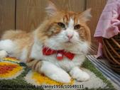 貓咪寫真:DSC07961.JPG