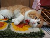 貓咪寫真:DSC07951.JPG