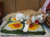 貓咪寫真:DSC07953.JPG