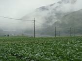 高冷蔬菜:DSC01562.JPG