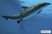 海豚是這樣出生的:海豚是這樣出生的1.jpg