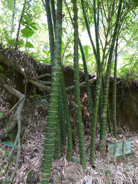 P1380862.JPG - 桐林森林生態園區