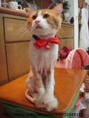 貓咪寫真:DSC04684.JPG