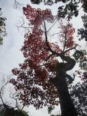 賞楓:2011.12.25馬拉邦山賞楓DSC09479.JPG