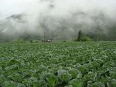 高冷蔬菜:DSC01568.JPG