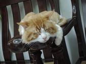 睡很大:睡很大