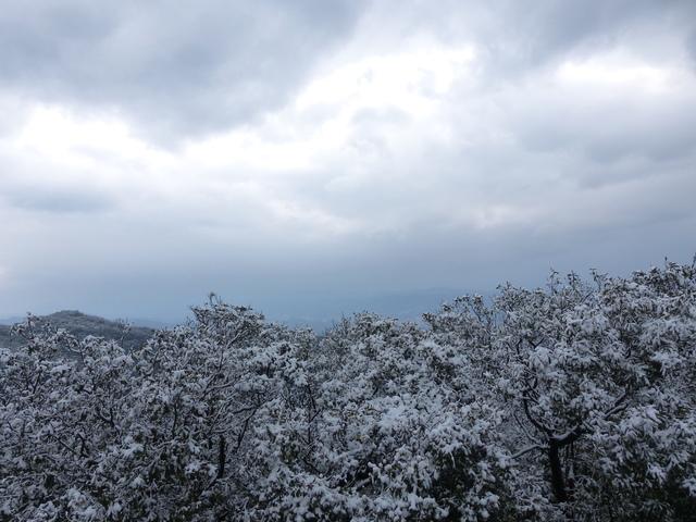 P1390764.JPG - 大崙頭山賞雪趣2016.01.24