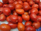 種子盆栽:DSC02661.JPG