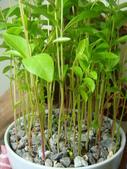 種子盆栽:DSC08488.JPG