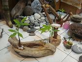 手工藝品:漂流木花器DIY DSC04410.JPG