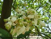 植物:DSC02687.JPG